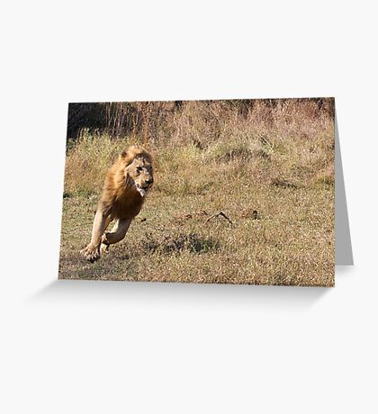 Lion Running From Buffalo Greeting Card