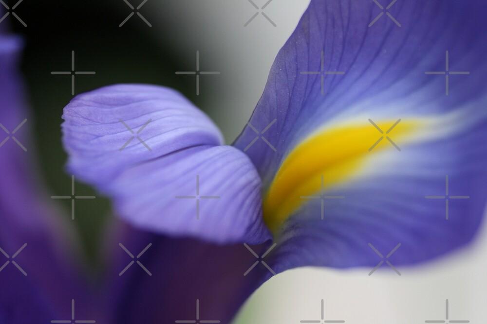 Iris of DREAMS by Joy Watson