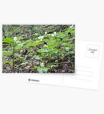 Directional Postcards