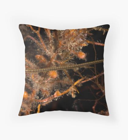 Wide Bodied Pipefish Throw Pillow
