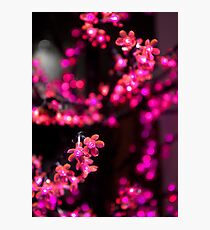 Hot Pink - Electric Cherry Blossom Tree Photographic Print