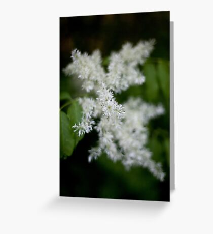 Whiteness Greeting Card