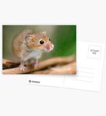 Happy Harvest Mouse Postcards