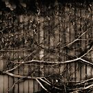 Fence & creeper by Duncan Waldron