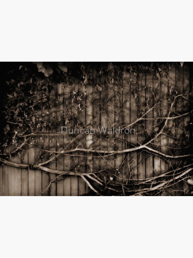 Fence & creeper by DuncanW