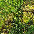 Ancient Hedgerow by artfulvistas