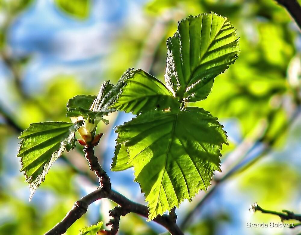 Fresh New Birch Leaf by Brenda Boisvert