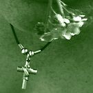 Daisies and Crosses by GlennB