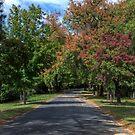 Autumn Colours, Hill End, NSW, Australia  (>200) by Adrian Paul
