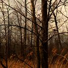 Blackbird by James L. Brown