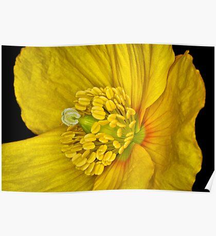 Flower 15 Poster