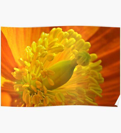 Flower 16 Poster
