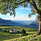 Italian Vineyards by Monica M. Winkler