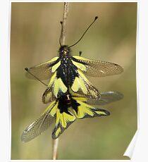 Owlflies Poster