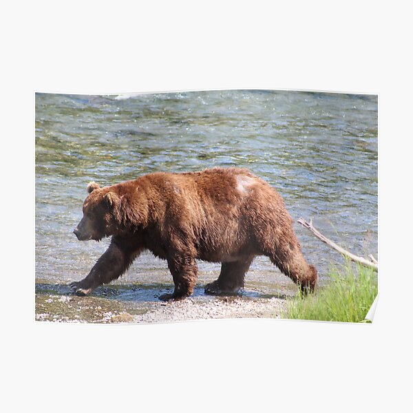 Bear On A Mission Poster