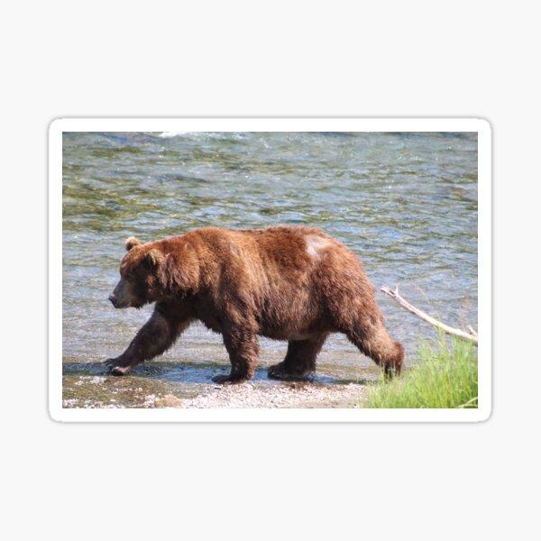 Bear On A Mission Sticker