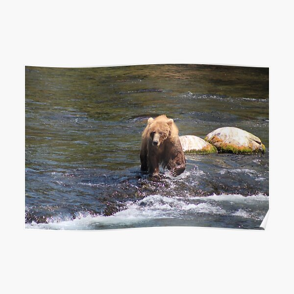 Bear #402 Out For a Stroll Poster