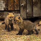 Fox Kitt's 4 by John  Sperry