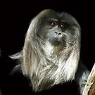 Macaque  by Magee
