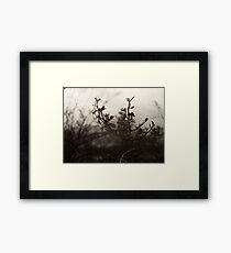 Brush Feild Framed Print