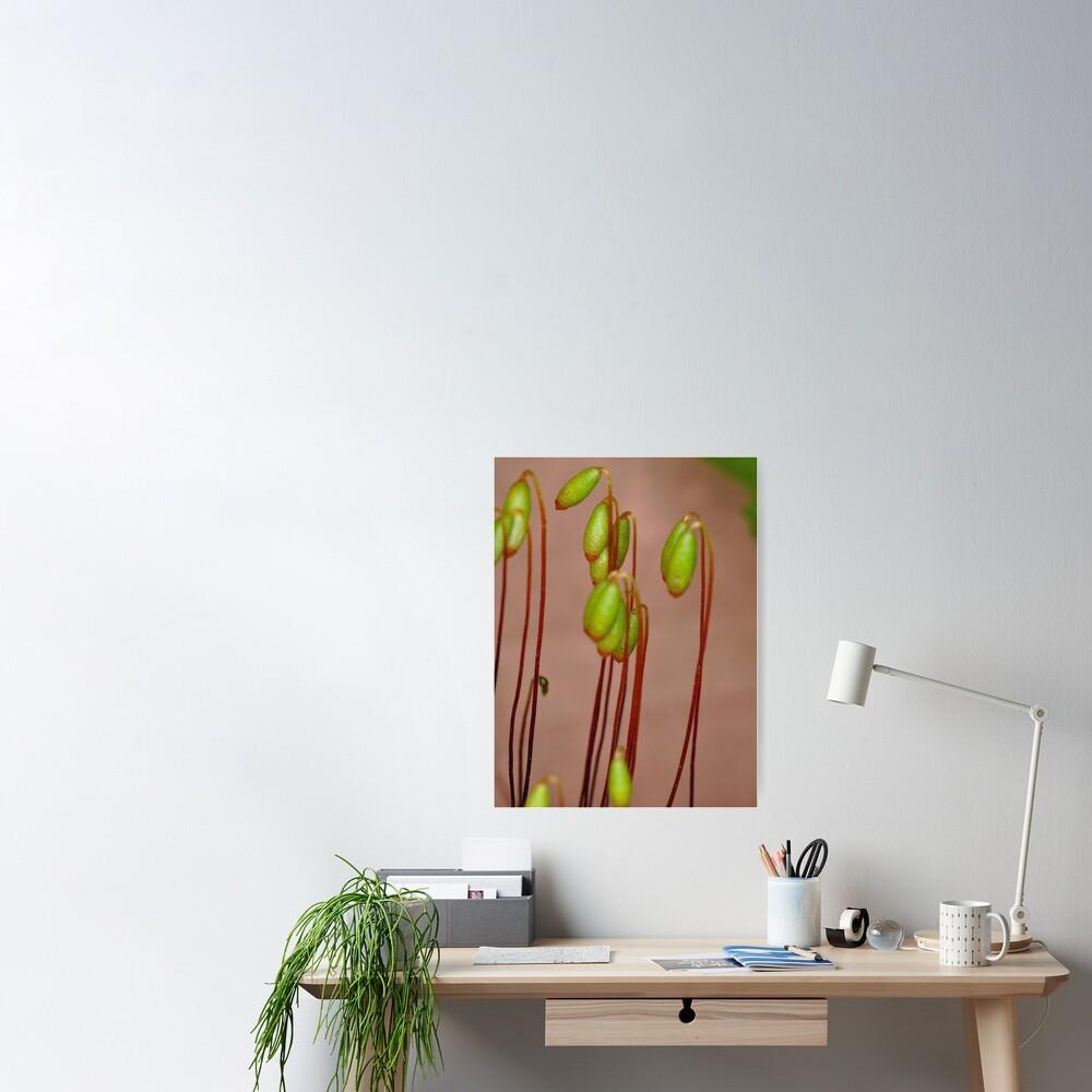 Moss Flowers Poster