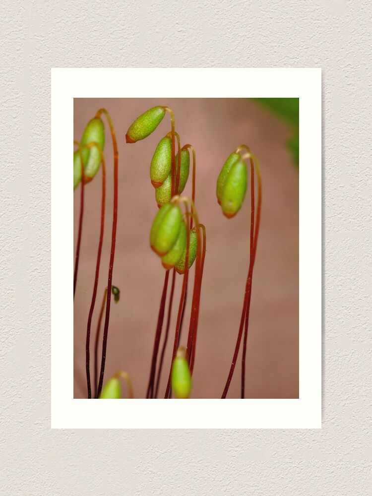 Alternate view of Moss Flowers Art Print