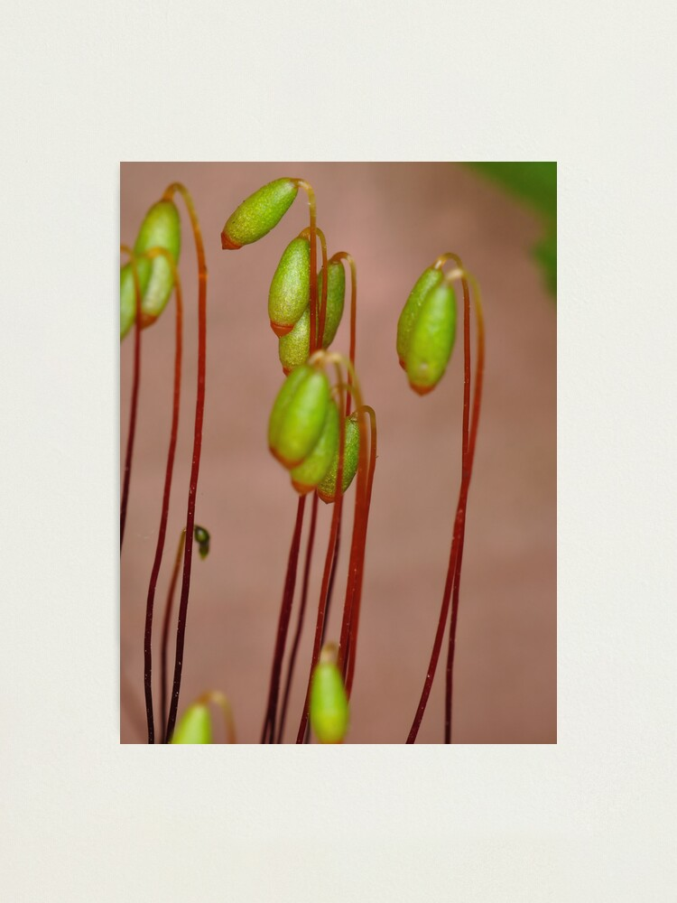 Alternate view of Moss Flowers Photographic Print