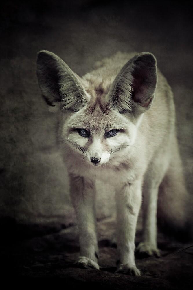 Fennec Fox by Natalie Manuel