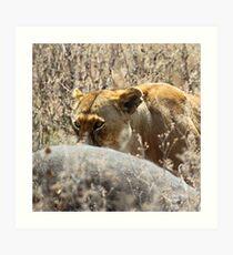 Lion with Buffalo Kill, Serengeti, Tanzania  Art Print