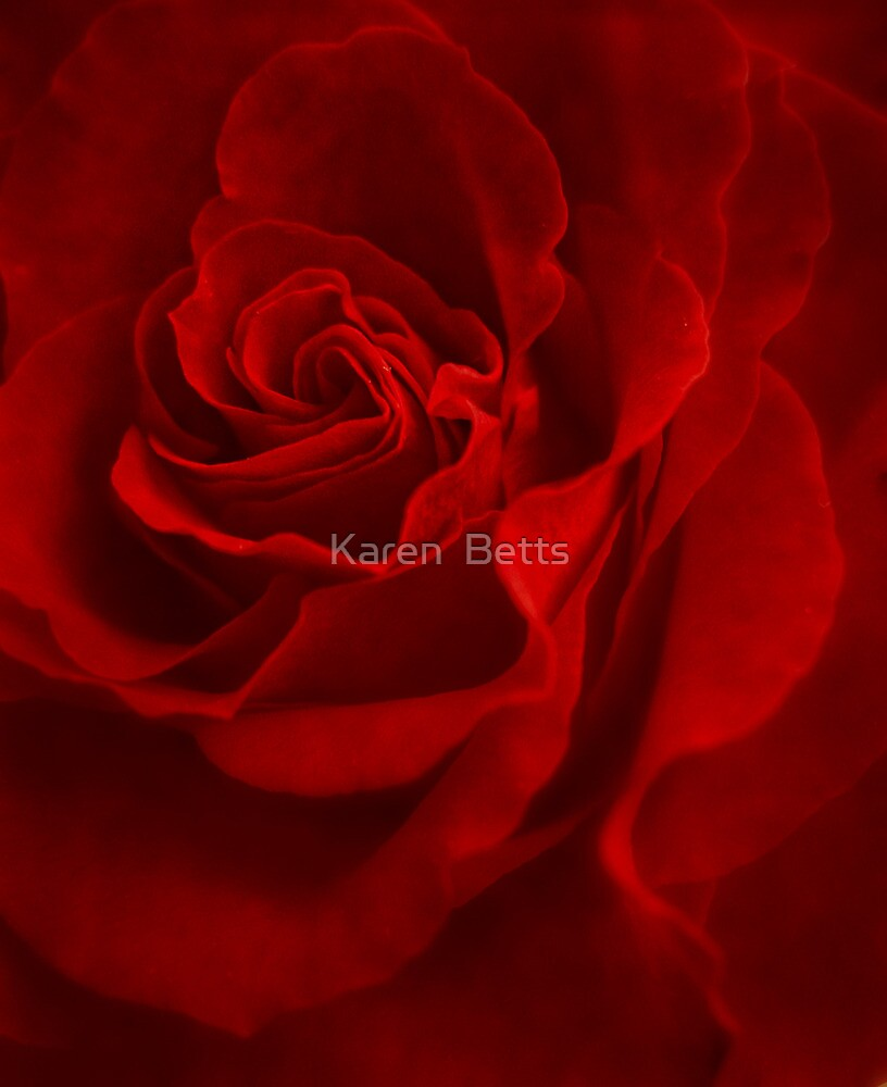 Red Rose by Karen  Betts