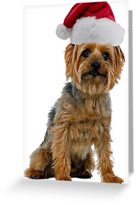 Silky Terrier Christmas by CafePretzel
