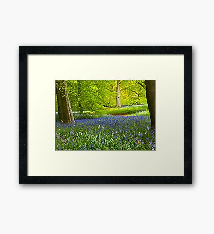 Spring in the Woods Framed Print