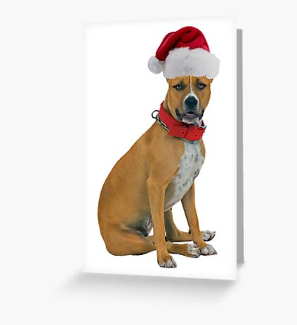 Staffordshire Bull Terrier Christmas Greeting Card