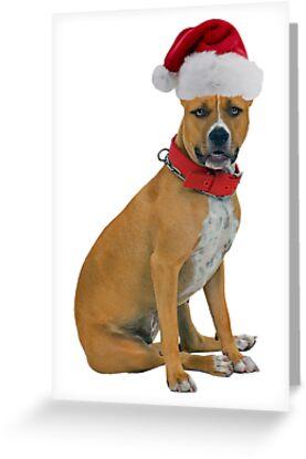 Staffordshire Bull Terrier Christmas by CafePretzel
