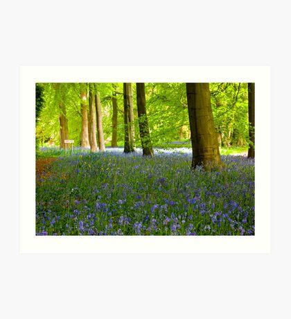 Woodland Scene - Thorpe Perrow. Art Print