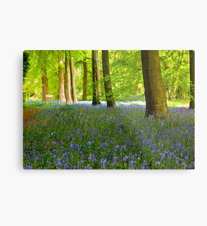 Woodland Scene - Thorpe Perrow. Metal Print