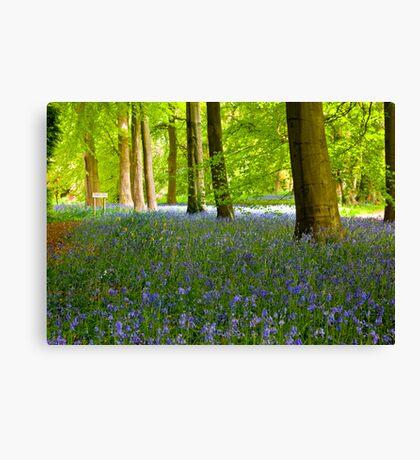 Woodland Scene - Thorpe Perrow. Canvas Print