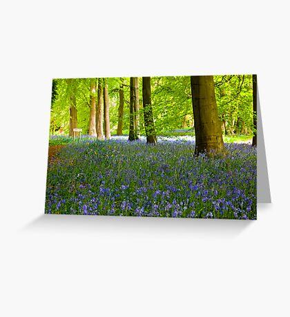 Woodland Scene - Thorpe Perrow. Greeting Card