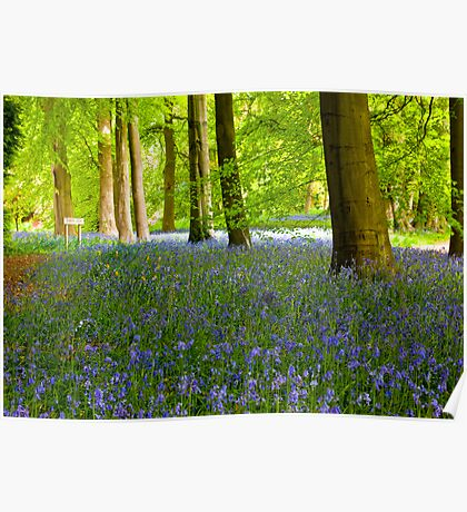 Woodland Scene - Thorpe Perrow. Poster