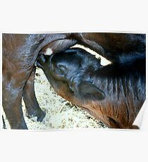 There's Nothing Like Mothers Milk Poster