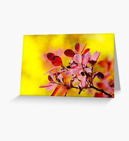 Smoke Bush Greeting Card