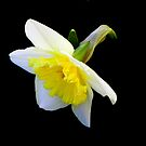 Spring has sprung!!! © by Dawn Becker