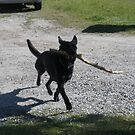 Amy Leelee Loves a Big Stick by Kay Hale