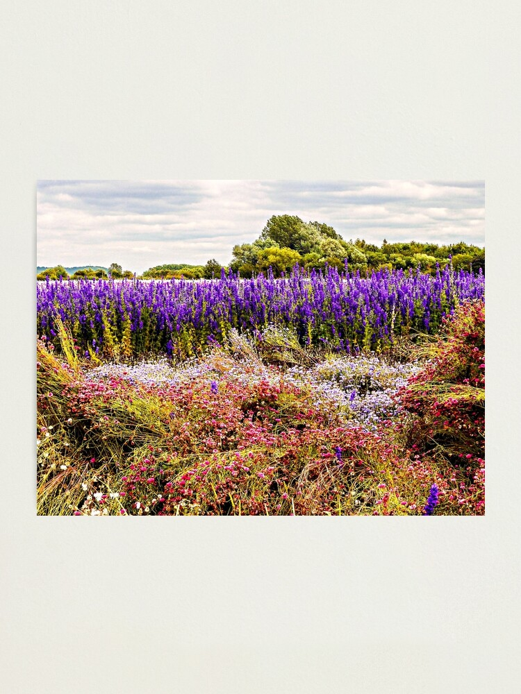 Alternate view of Nature's Canvas Photographic Print