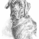 big dappled dog drawing by Mike Theuer