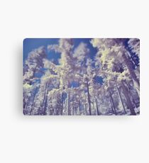 Coniferous Trees in Infra Red Canvas Print