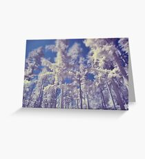 Coniferous Trees in Infra Red Greeting Card