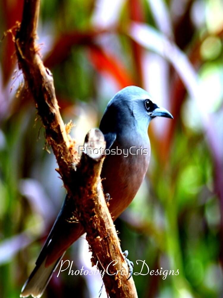 Bird of Colours by PhotosbyCris