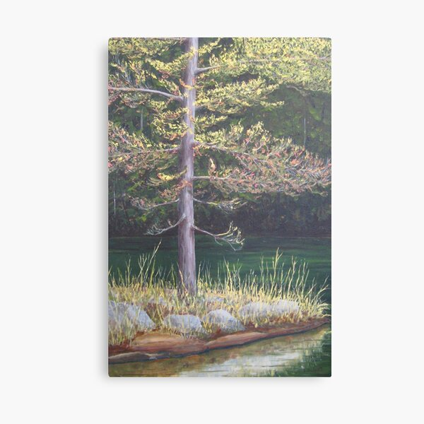 Pine on the Point Canvas Print