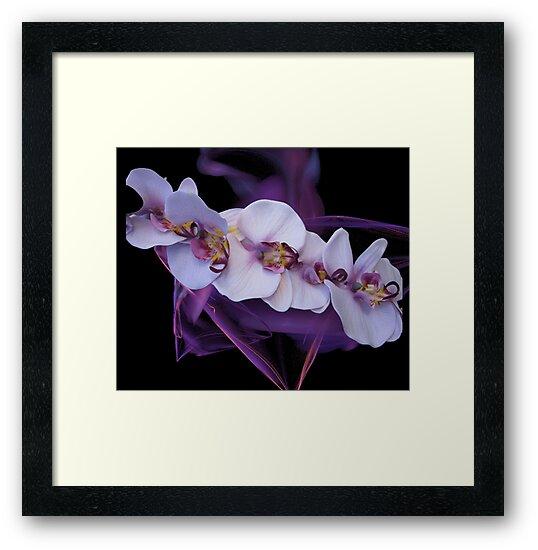 Purple Orchids by Mistyarts
